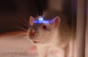 Optogenetics_Blue_Laser_Rat